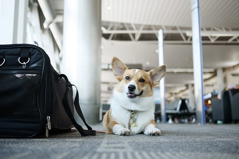 What you need to know to travel Abroad with Your Pet